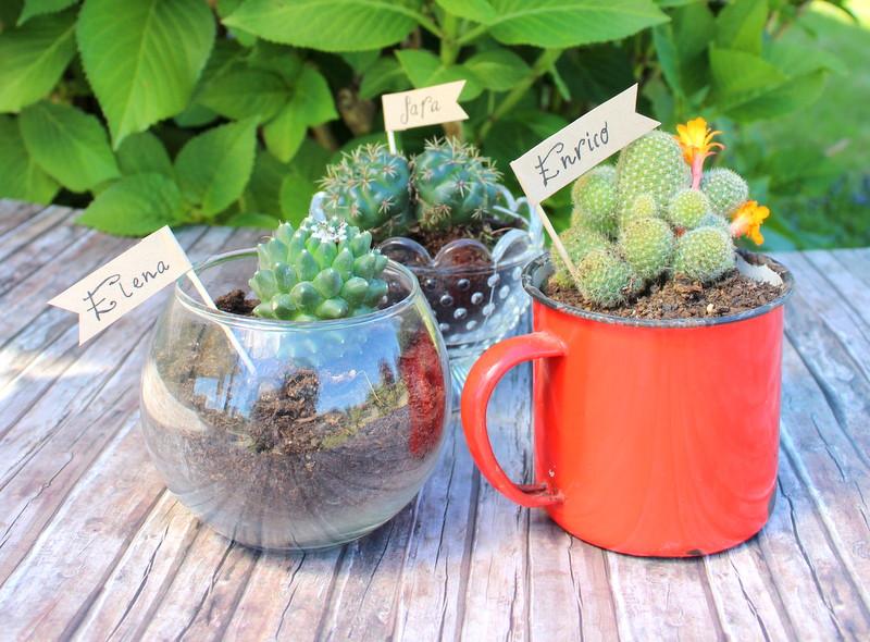 Segnaposto-piante-grasse-1