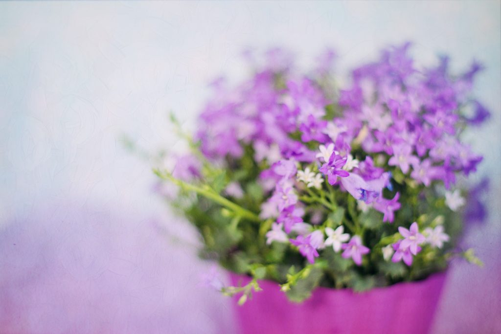 fiori-vaso