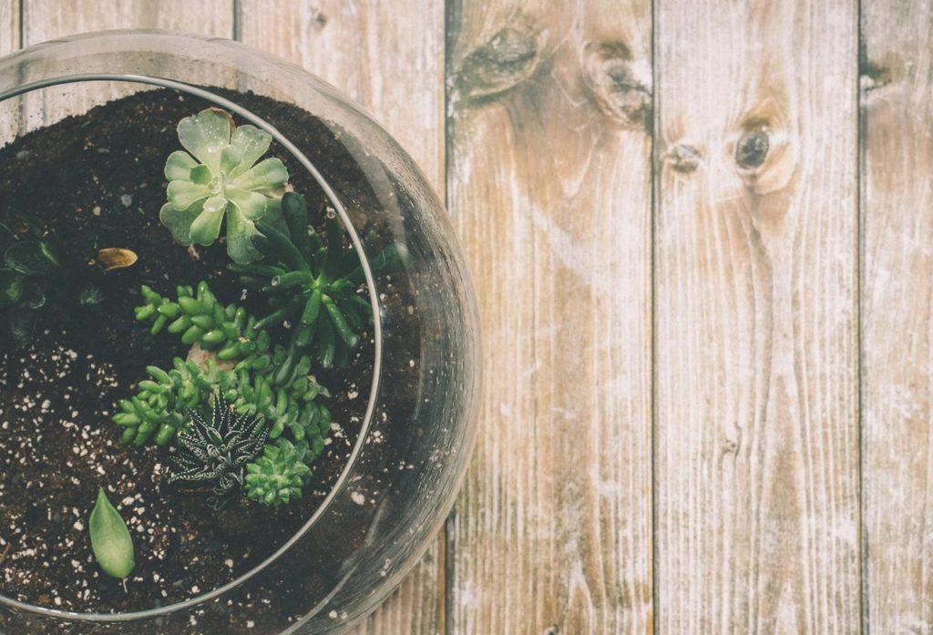 succulent-pot-1