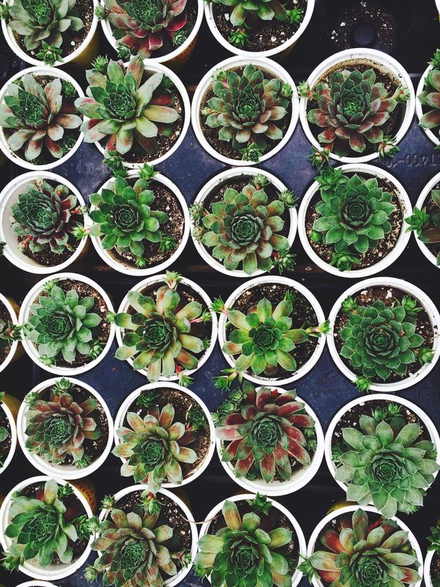 succulent-pots-1