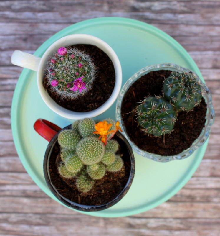 succulent-tris-favor-1