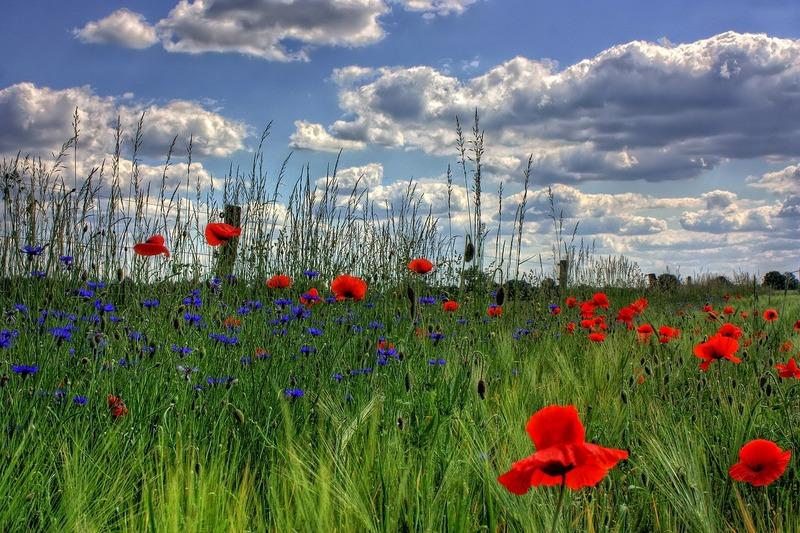 1-primavera-prato-fiorito