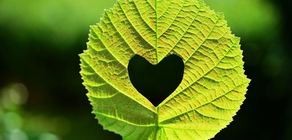 Foglia-cuore-greenlife