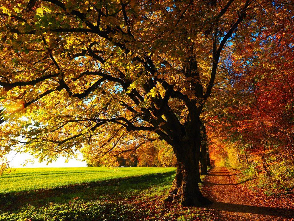 autunno-bosco