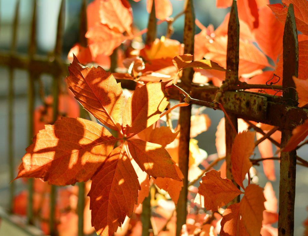 foglie-arancioni-autunno